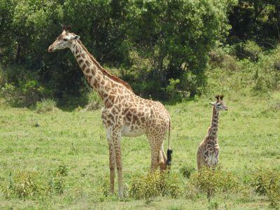 Moeder en kleintje