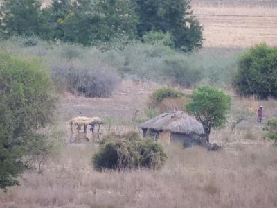 Massai huisje