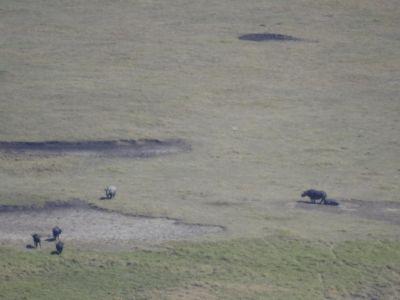 Neushoorns gespot vanaf de kraterrand