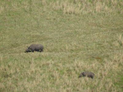 Neushoorns in de krater vanaf de kraterrand