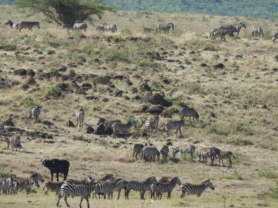 Grote kudde dieren