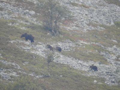 Beren gespot