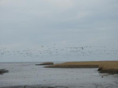 Grote groepen vogels trekken over