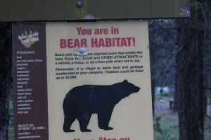 You are in bear country