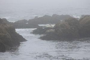 Mist tijdens whalewatch tour