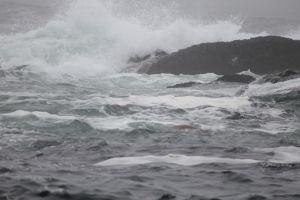 Oceaan tijdens whalewatch tour