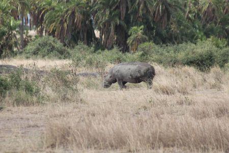Een verdwaalde nijlpaard