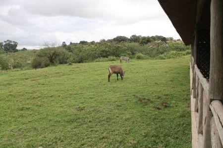 Visite in de tuin bij de Rhino Lodge