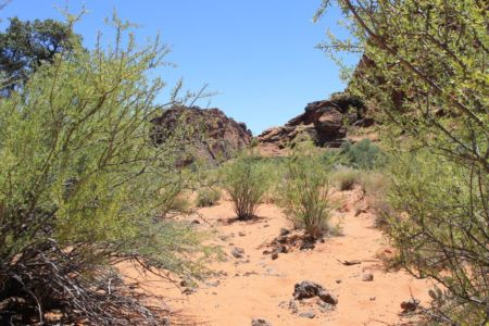 Wandelen in de woestijn