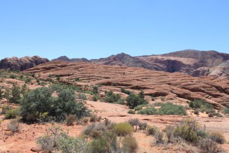 Red Cliffs Desert