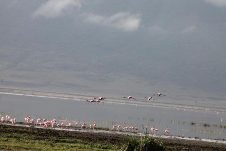 Flamingo's in en boven Lake Magadi