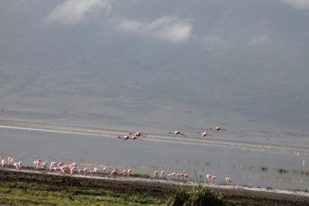 Flamingo's in en boven Lake Magadi