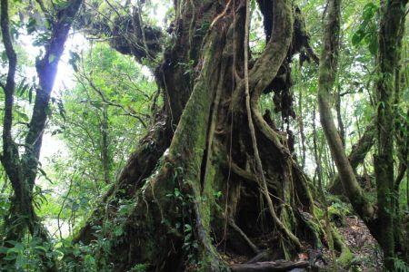 Het bos kent vele oude bomen
