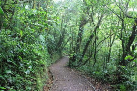 Volg de prachtige wandelpaden door het bos