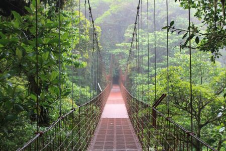De 100 meter lange rode hangbrug door het Cloud Forest