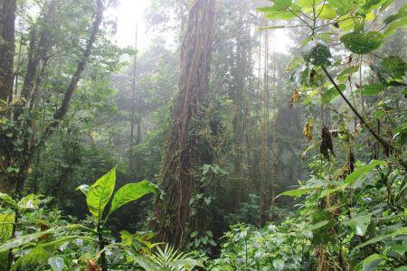 Bomen zijn vol gegroeid met mos