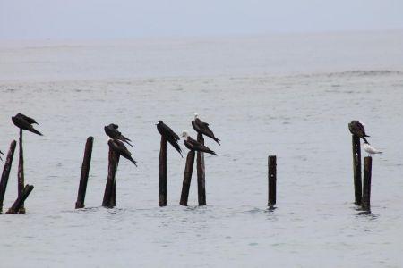 Watervogels wachten op een lekker hapje