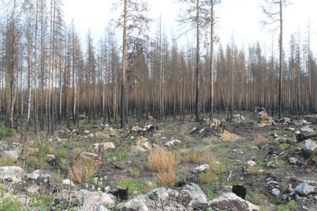 In 2018 is het gebied verwoest door een grote bosbrand