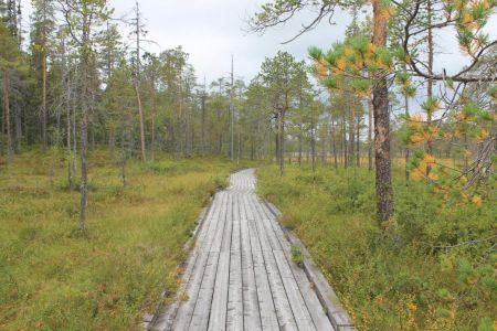 De boardwalk van Urskogslingan