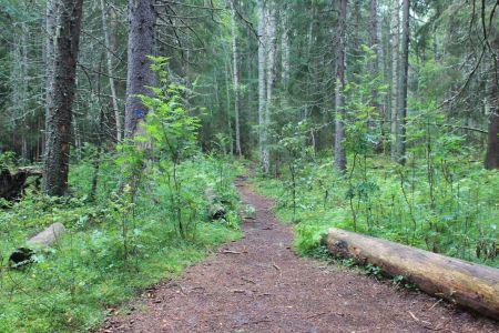Prachtig bos
