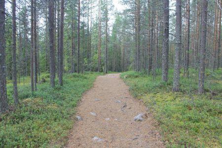 De Vaattunkivaara Nature Trail