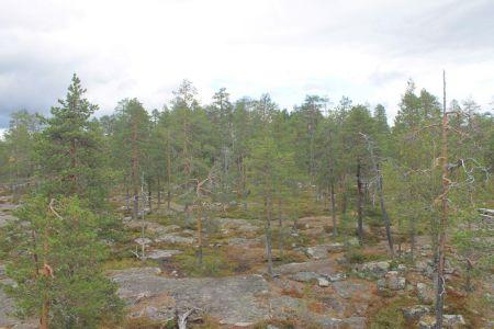 Het bos rondom Vaattunkivaara