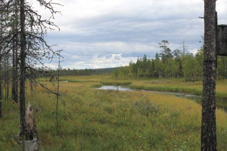 Landschap rondom de Säynäjäoja hut