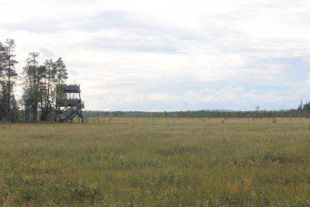 Suoluontopolku Mire Trail