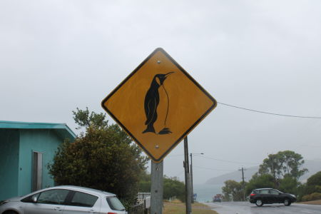 Watch Out Pinguins
