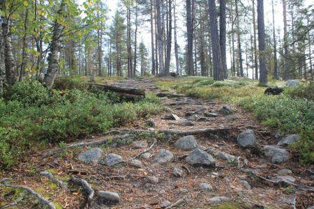 Het bos van Muddos National Park