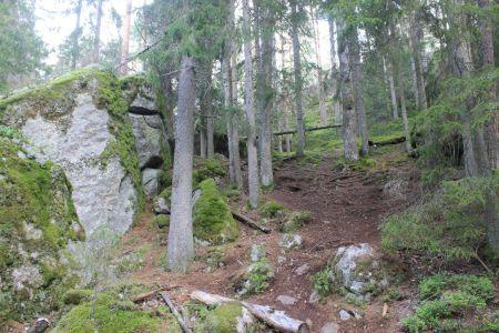 Een eeuwenoud bos