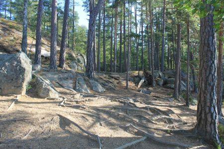 Heerlijk door het bos wandelen