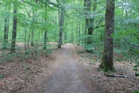 Heerlijk wandelen in het bos