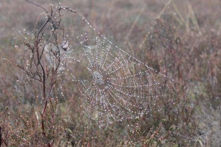 Op de vroege morgen zie je nog dauw en spinnenwebben