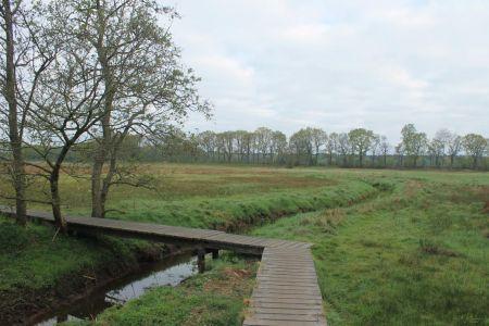 Een bruggetje door het veengebied