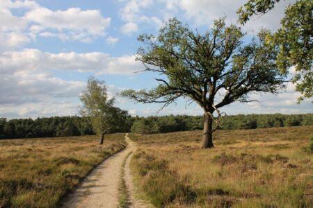 Alleen over de paden wandelen