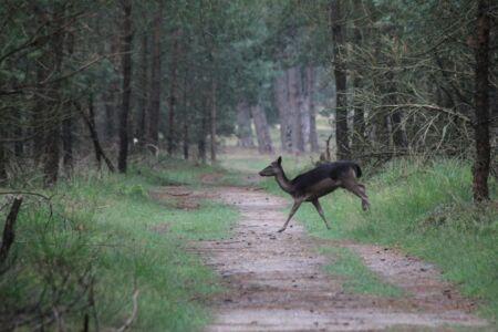 Overal schieten beesten het pad over