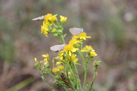 de vlinders drogen zich na de regenbui