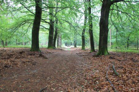 Het heerlijke bos