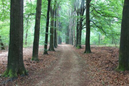 Het prachtige Loenense bos
