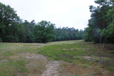 In het bos zijn meerdere open velden