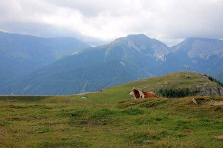 Ook de koeien genieten van het uitzicht