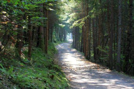 Dwaal door het bos