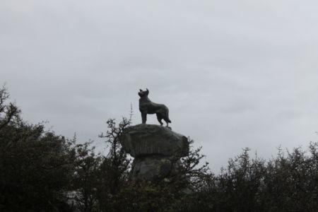 Standbeeld van de collie schaapshond