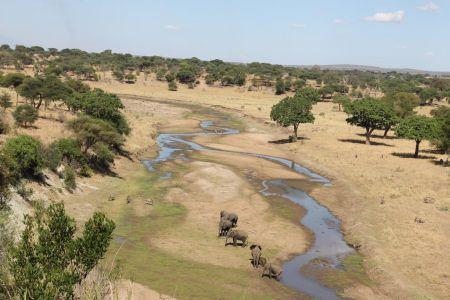 Alle dieren verzamelen zich bij de bijna uitgedroogde Tarangire River