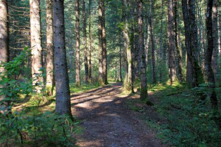 Slow Trail: één met de natuur