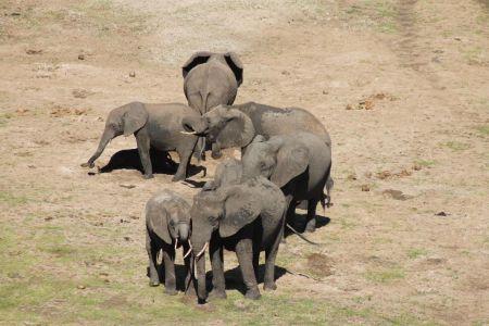 Kleine kudde olifanten