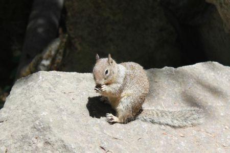 Op de Mist Trail kom je veel eekhoorns tegen