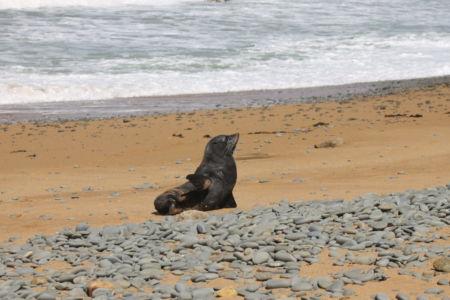 Op het strand van Kakanui