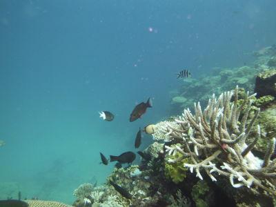 Vissen rondom koraal